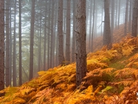 700_fog_forest_hd