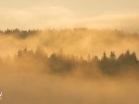 Morning fogs
