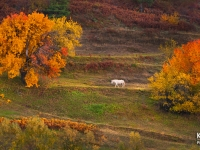 700_hd_kru57755_horse