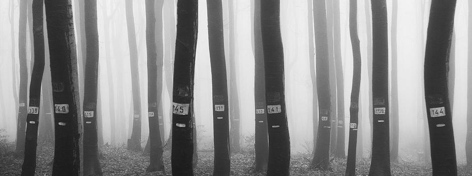 Survivors - Petar Krusev