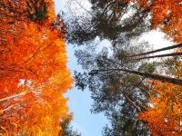 700_kart_autumn_hd