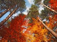 Batak forest